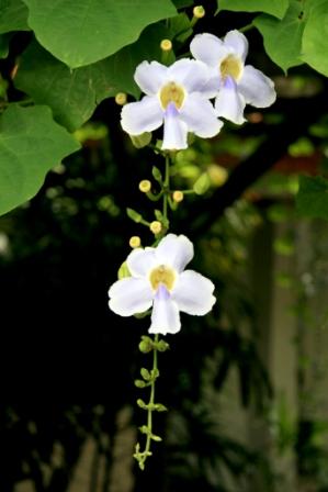 acupuntura bogota colombia